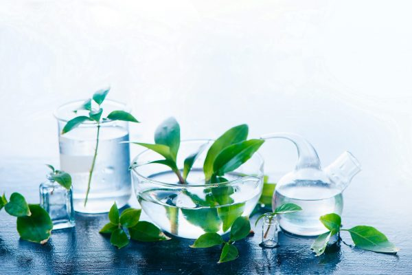 Medical plants in laboratory glassware header. Perfume and cosmetics natural concept with copy space.